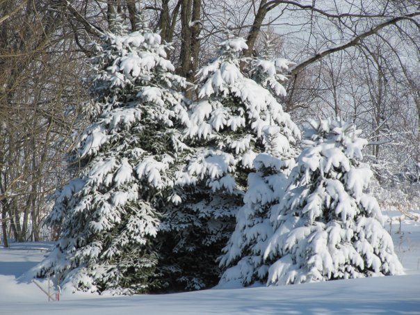 Snow in beautiful Pennsylvania, 2010