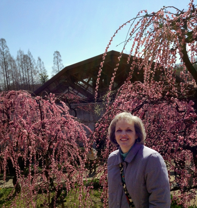 The plum blossoms have arrived!