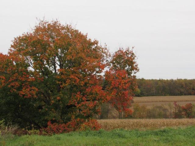 Fall PA 2013-39