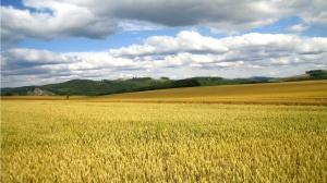 motocross-wheat-field-hd-image-free-483582