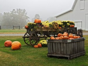 Pumpkin Harvest Wallpaper__yvt2